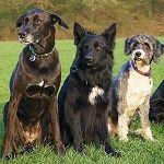 Hundeschule-Wetterau-Hundegruppe2