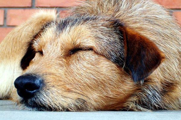 Hundeschule-Wetterau-Tierschutzhund
